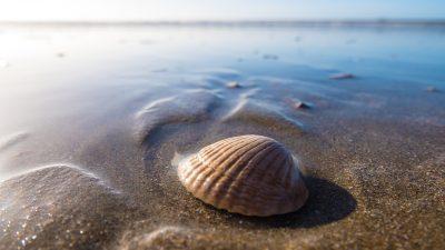 conchiglia-mare